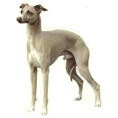 Double Sided Dog Decal Italian Greyhound