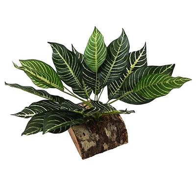 Tropical Terrace Large Zebra Leaf Terrarium Plant
