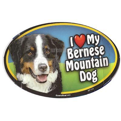 Dog Breed Image Magnet Oval Bernese Mountain Dog