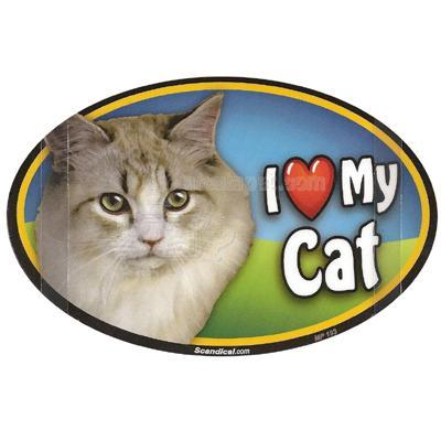 Cat Image Magnet Oval Maine Coon
