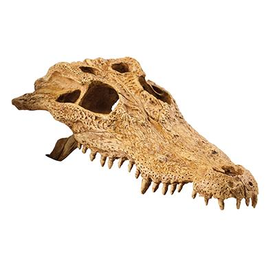 Exo Terra Crocodile Skull Terrarium Ornament Click for larger image