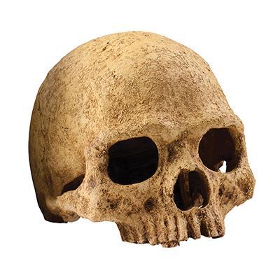 Exo Terra Primate Skull Terrarium Ornament