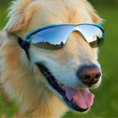K9 Optix Medium Blue Protective Eyeware for Dogs