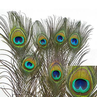 Natural Peacock Feather Cat Toy 6 pack Click for larger image