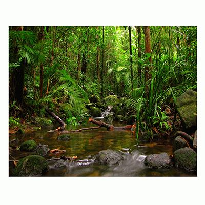 Jungle Aquarium Terrarium Vinyl Background 36x18