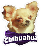 6-inch Vinyl Dog Decal Chihuahua Picture