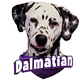 6-inch Vinyl Dog Decal Dalmatian Picture