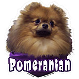 6-inch Vinyl Dog Decal Pomeranian Picture title=