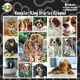 Arf Art Dog Sticker Pack Cavalier King Charles Spaniel
