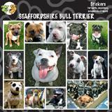 Arf Art Dog Sticker Pack Staffordshire Terrier
