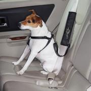 Ride Right Seat Belt Connector Dog Car Restraint