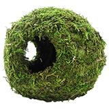 Galapagos Mossy Cave with Holes 8 inch