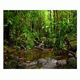 Jungle Aquarium Terrarium Vinyl Background 36x18