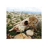 Desolate Landscape Aquarium Terrarium Vinyl Background 30x13