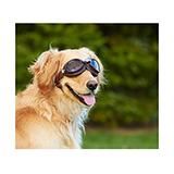Doggles Eyeware for Dogs Side Car Silver