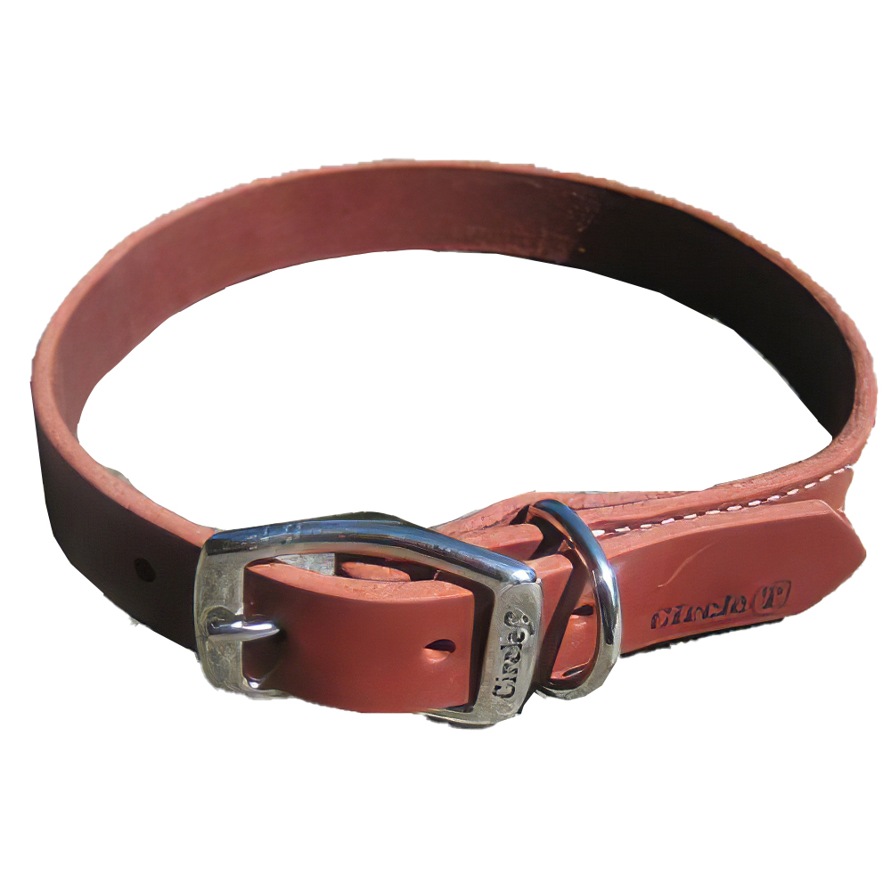 Circle T Latigo Single Layer Leather Dog Collar 24 inch