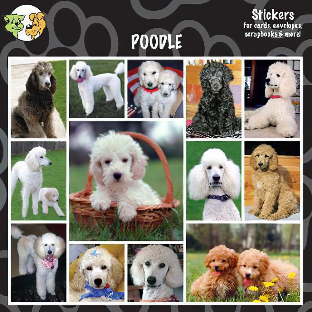 Arf Art Dog Sticker Pack Poodle