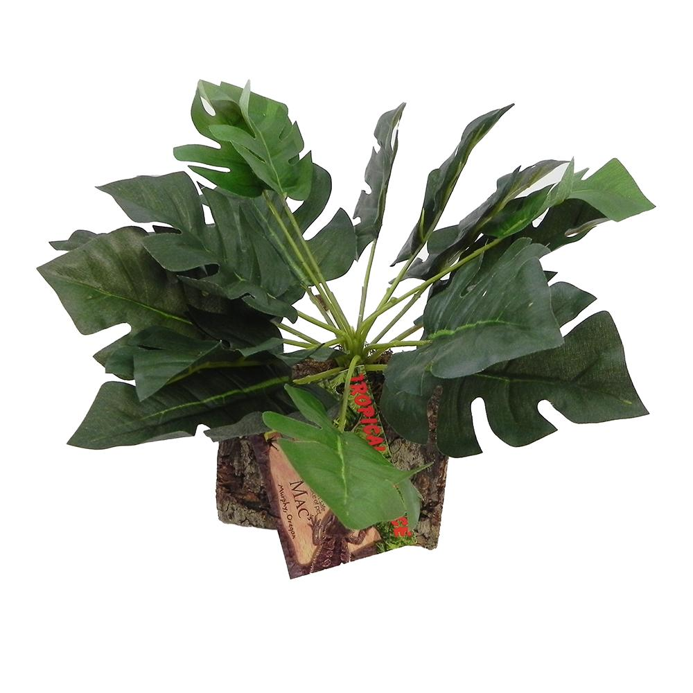 Tropical Terrace Large Split Leaf Philodendron