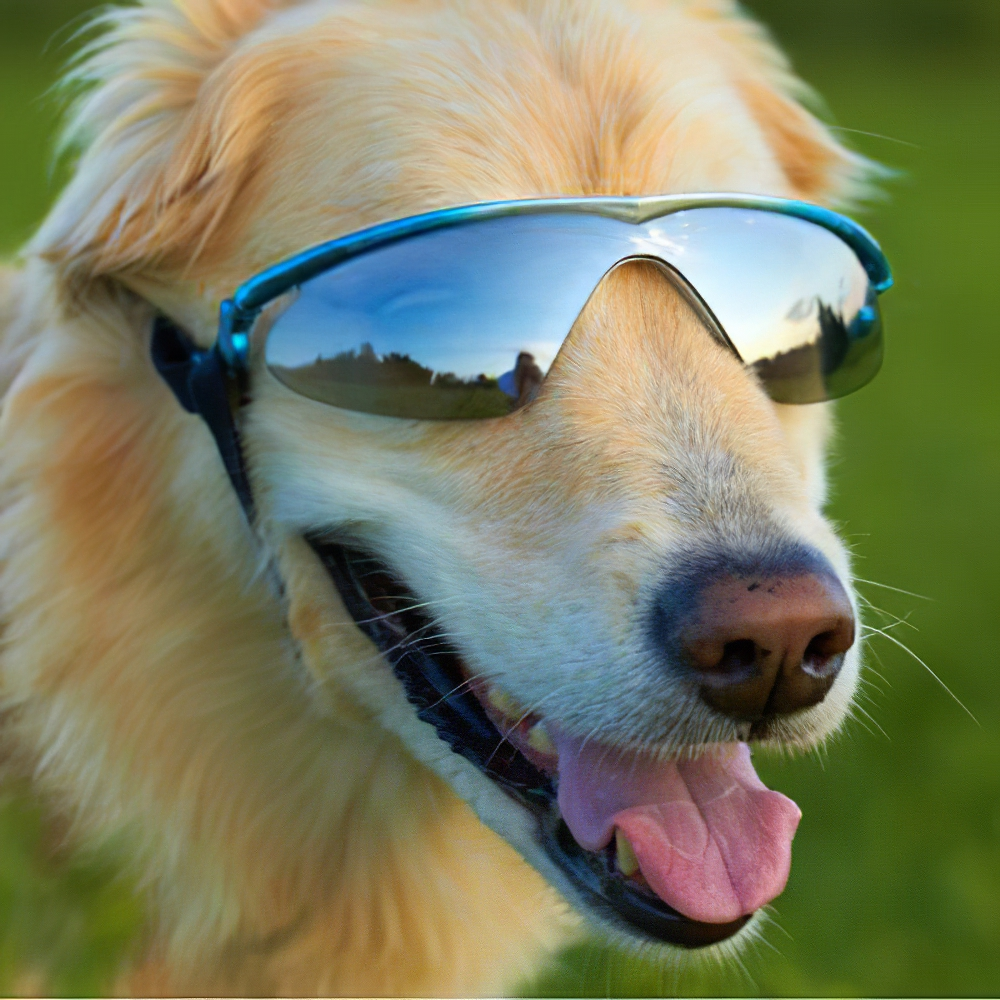 K9 Optix Large Blue Protective Eyeware for Dogs