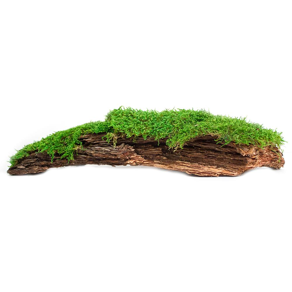 Galapagos Mossy Bark Natural Terrarium Decoration