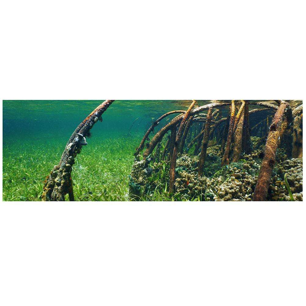 Galapagos Mangrove Cling Aquarium Background 10 Gallon