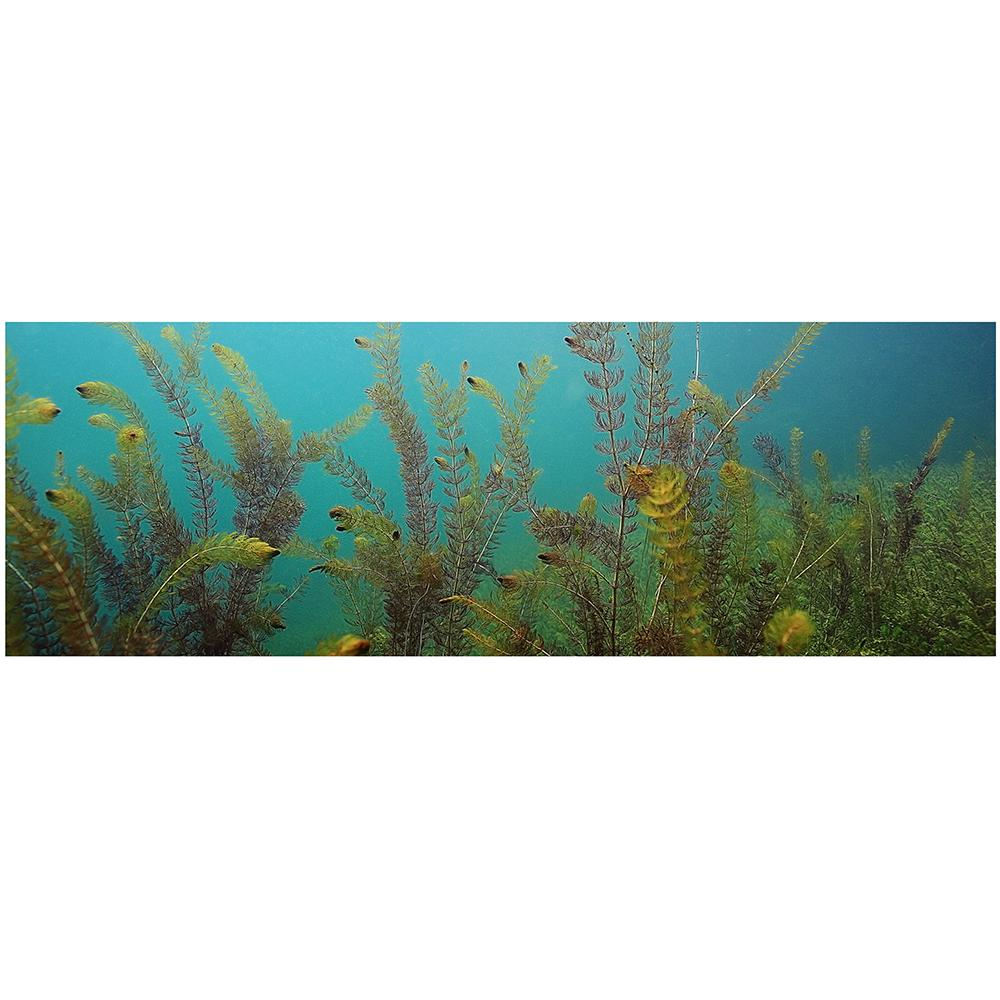Galapagos Aquatic Plants Cling Aquarium Background 10 Gallon