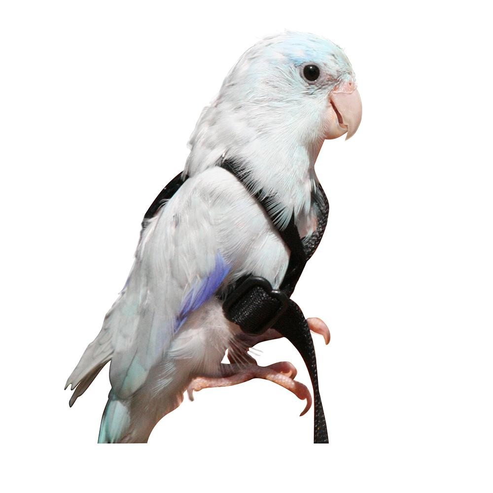 Aviator Bird Harness XSmall Black